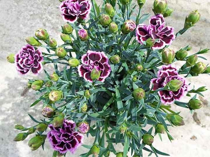 Φυτά σε γλάστρες