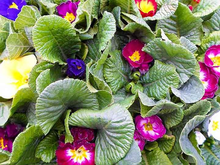 Φυτά σε κύπελλο